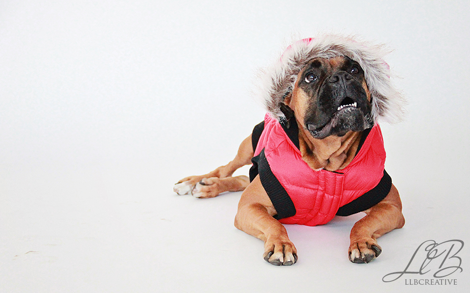 Toronto-dog-photographer
