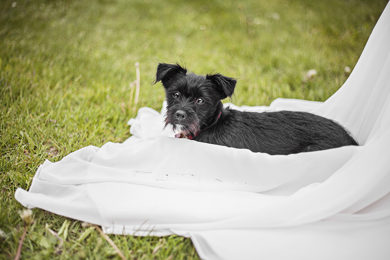 dog-friendly-toronto-wedding-photographer