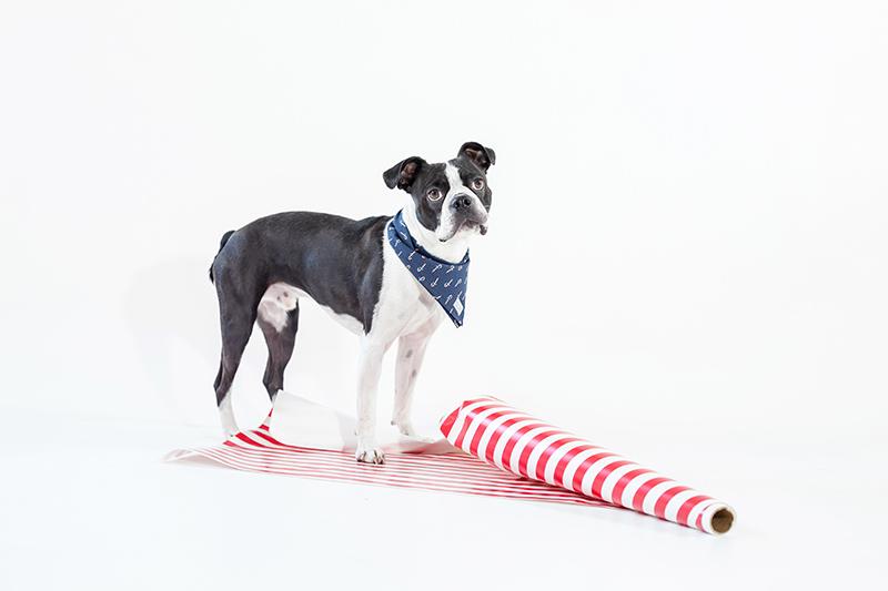 toronto-branding-photographer-dog-bandana-lookbook