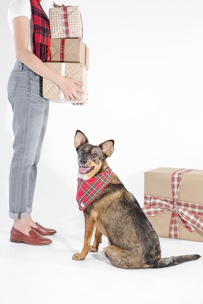 toronto-branding-photographer-pet-commercial-shoot
