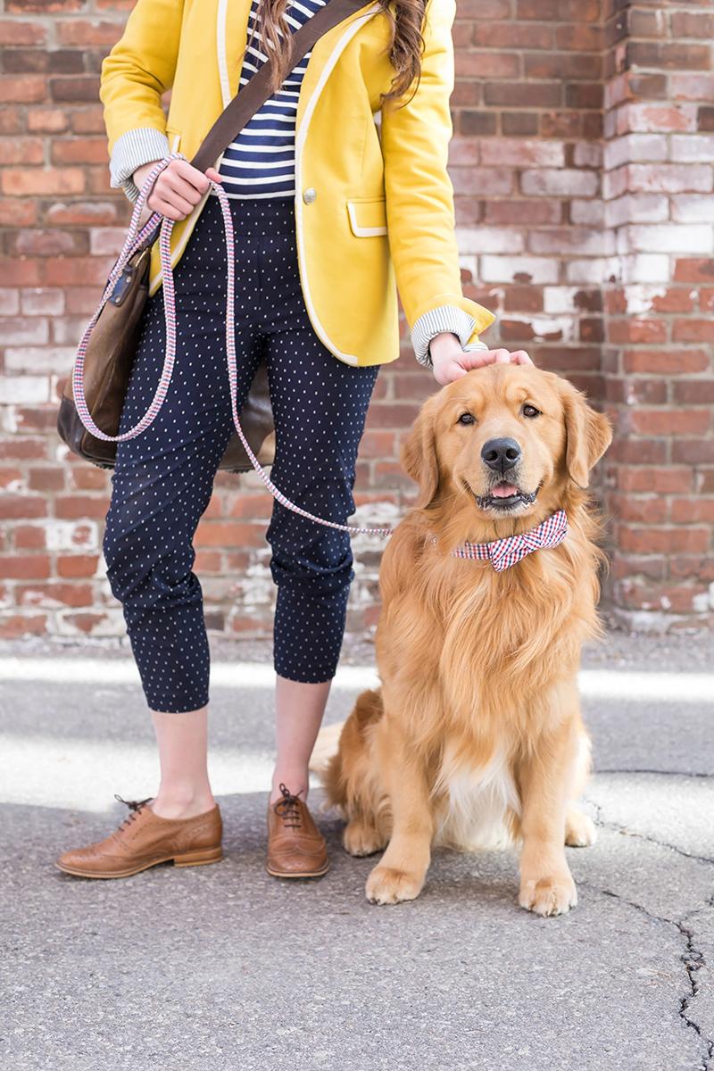 toronto-commercial-photographer-dog-collar-lookbook